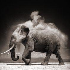 Nick Brandt retrata íntimamente la fauna africana.