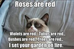 Grumpy Cat Poem - Roses are Red, Violets are Red...