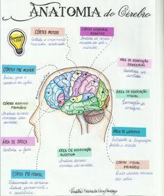 O cérebro é o principal órgão do Encéfalo, e sem dúvida é o órgão mais misterioso e interessante do corpo humano, não pela sua gama de funções, mas sim pela destreza com que ele controla todas as atividades que ocorrem dentro de seu organismo de forma muito harmoniosa e perfeita mantendo a homeostase.