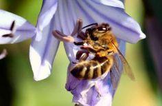 Aquí Podrá Encontrar Remedios Caseros Para Aliviar Las Picaduras De Insectos Como Mosquitos Abejas Avispas Picaduras De Insectos Picaduras Remedios Caseros