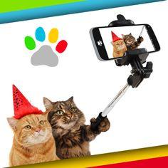 In Müncheberg sind die Katzen los. Für Hinweise zu den ausgebüchsten Partypfötchen gibt es ein Jobangebot als Tierpfleger! Schönen Weltkatzentag!
