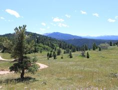 Unique opportunity to own private deeded mountain land off Red Grade Road.    This 10.62 acre parcel has numerous ideal building sites for your new cabin.    With Black Tooth Peak front and center, it will be difficult for that to not be the focal point of your cabin.    As mentioned, the views from this site direct your eyes to the Little Goose drainage below the crest of Highland Park which sits below the prominent 13,005 ft. Black Tooth and 12,982 ft. Mount Woolsey Peaks.     The cabin…