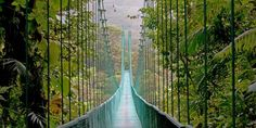 Hängebrücke im Monteverde Nebelwaldreservat