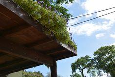 Que tal esse belo telhado verde? Melhora a qualidade e temperatura do ar!