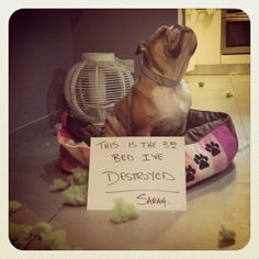 1000 Images About Pet Shame On Pinterest Cat Shaming