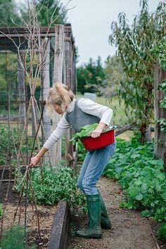 Kitchen garden in raised beds with twig trelllis