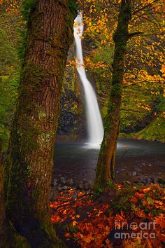Horsetail Falls surrounded by the glory of Autumn in the Columbia River Gorge of Oregon