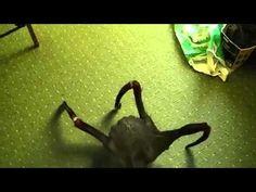 REAL ALIEN??  #alien #aliens #real #monster #monsters #creature