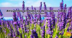 El Dr. Cho ha desarrollado algunos métodos para el control de plagas, como atrayente de insectos aromático (AIA), atrayente de insectos fluorescente (FIA) y el método de utilización del olor de los peces. Plants, Natural Farming, Pest Control, Insects, Plant, Planets