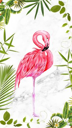 Flamingo discovered by on We Heart It Flamingo Wallpaper, Summer Wallpaper, Cute Wallpaper Backgrounds, Wallpaper Iphone Cute, Cute Wallpapers, Flamingo Painting, Flamingo Art, Pink Flamingos, Greater Flamingo