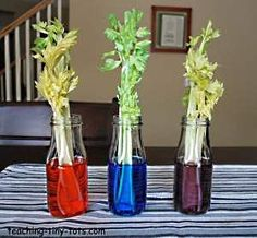 Celery Experiment: The celery turns to the color you put in the bottle. Kids love it.