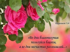 Одноклассники Biblical Verses, Bible Verses, Special Flowers, Beautiful Roses, Pray, Words, Quotes, Pictures, God