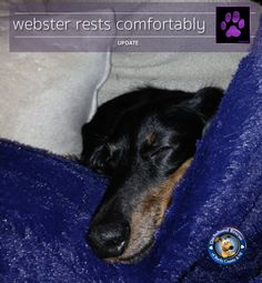 * * * * MATCHING FUNDS OFFER * * * * Hey Gang, we just got an exciting note! A kind and generous follower that has chosen to stay anonymous is offering to contribute the last $500 for Webster's funding if we can get to the $2500 mark. We only have a week left on this fundraiser and helping Webbie means we can step up and help others. Please, please follow the link and help us make that difference today.   https://www.youcaring.com/WebstersPneumonia