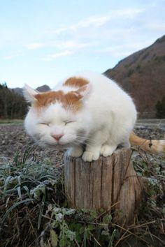 frosty morning. Shiro