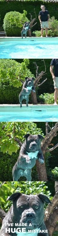 Jump in the pool they said... #funny #hilarious