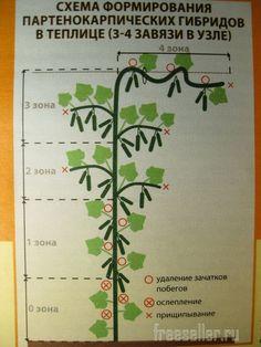 Pruning and shaping cucumbers in a greenhouse – Tree House Ideas Texas Gardening, Gardening Tips, Garden Deco, Garden Tools, Cucumber Trellis, Vegetable Garden Design, Small Farm, Garden Planning, Backyard