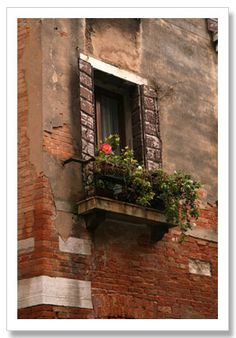 Art Giclee Prints Posters - Window with a Red Rose Venice Italy