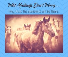 Wild Mustang horses don't worry, they trust the abundance will be there.