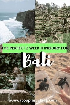 There are so many awesome things to do in Bali like releasing sea turtles in Kuta, surfing in Canggu and exploring the rice terraces in Bali. Bali is a beautiful part of Indonesia, so make sure you add it to your bucket list! Here is the ultimate 2 week Bali itinerary! #acouplescalling #bali #indonesia #balitravel Bali Travel Guide, Asia Travel, Travel Guides, Things To Do In Italy, Backpacking Asia, Rice Terraces, Kuta, Sea Turtles, Ultimate Travel