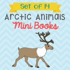 These 8-page arctic animals mini books make great stand-alone research projects, or additions to your science interactive notebooks! The arctic animals included in this bundle: Arctic Fox, Arctic Hare, Beluga Whale, Caribou, Dall Sheep, Harp Seal, Musk Oxen, Narwhal Whale, Orca, Polar Bear, Puffin, Snow Goose, Snowy Owl, and Walrus.