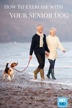 Your dog might be getting older, but he still enjoys walking with you!