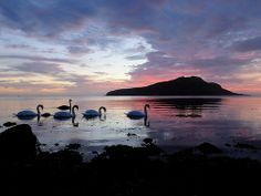 Swan Dawn - feeding in Lamlash Bay, Isle of Arran Scotland Isle Of Arran, Cairngorms, British Countryside, England, Photo Reference, Love Pictures, Glasgow, Wonders Of The World, Places To Visit