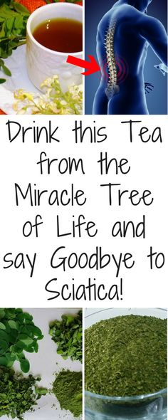 Miracle Diets - Drink this Tea from the Miracle Tree of Life and say Goodbye to Sciatica! - Moringa Leaf– An Extremely Powerful Herb for Sciatica - The negative consequences of miracle diets can be of different nature and degree. Sciatica Pain Treatment, Sciatica Pain Relief, Sciatic Pain, Sciatic Nerve, Sciatica Symptoms, Treating Sciatica, Miracle Tree, Moringa Leaves, Moringa Oleifera