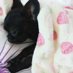 10 síntomas que puede sufrir tu perro y que no debes ignorar