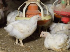 2016 offers bright hopes for state's poultry, eggs