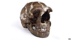Gene types that influence disease in people today were picked up through interbreeding with Neanderthals, a major study in Nature journal suggests. They passed on variants involved in type 2 diabetes, Crohn's disease and - curiously - smoking addiction.