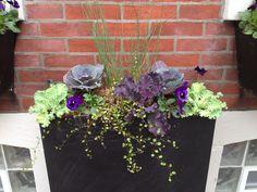 New fall planter Cabbage Window box