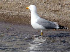 Greece, Island, Bird, Photos, Animals, Greece Country, Animales, Animaux, Birds