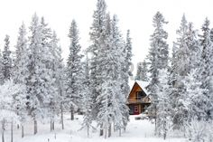 White Christmas In Winter Cabin In The Woods Between Snow Covered ...