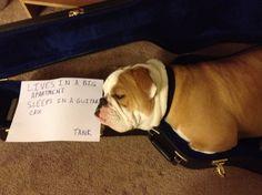 guitar case = safe dog cave
