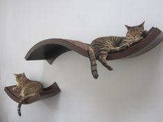 Cat Shelves by jen.marchman