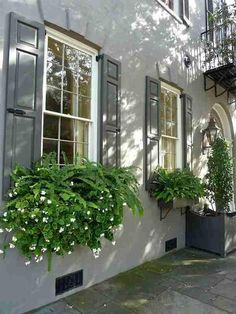 Perfect Shade Plants for Windows Boxes 75 - can find Windows and more on our website.Perfect Shade Plants for Windows Boxes 75 - Fall Window Boxes, Window Box Flowers, Shade Flowers, Shade Plants, Window Planter Boxes, Planter Ideas, Garden Windows, Windows Decor, Container Flowers