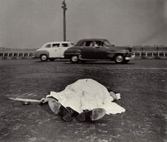 The victim of a motor accident lies by the side of the West Side Highway in New York, covered by a sheet, 1939, by Weegee.