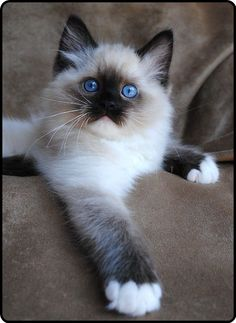 sweet little blue eyes…