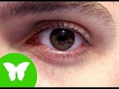 La Eduteca - Los sentidos: la vista - YouTube. http://lacasadelpasaron.blogspot.com.es/2015_09_01_archive.html