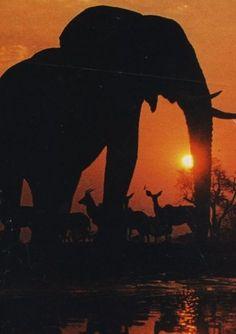 (africa,elephant,kudu)