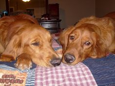 Dakota & Max - NAP TIME!!!!