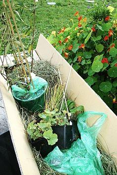 Frisch gepflanzt: mein Staudenbeet auf dem Garagendach - Erfahrungen mit verschiedenen Versandverpackungen von Stauden