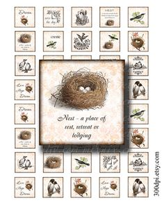 1 x 1 inch squares printable download digital collage sheet vintage images nest bird tiles print pendant magnet sticker no.211A