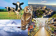100 de curiozitati despre lumea in care traim Cow, The 100, Animals, Zoology, Geography, Animales, Animaux, Animal, Animais