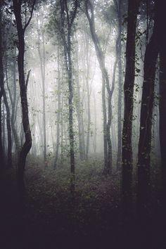 October Mist #mist #forest