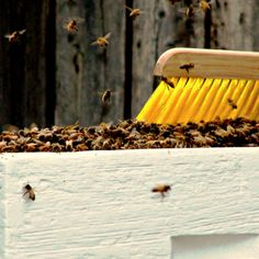 To Bee, or Not to Bee? Should I Keep a Hive? 10 Questions to Ask Yourself |