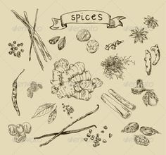 Spices Sketch