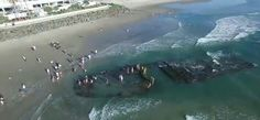 The shipwreck of the Monte Carlo, a gambling ship that sunk in 1937, has resurfaced on the beaches of Coronado, California.