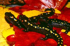 The First Solar Powered Vertebrate Discovered - Renew India Campaign - solar photovoltaic, Indian Solar News, Indian Wind News, Indian Wind Market