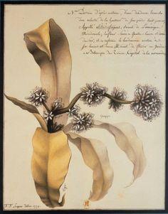 Lequeu, Jean Jacques (1757-1825?). Date d'édition : 1779